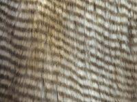 Tissu fausse fourrure, fausse fourrure, tissu fourrure synthétique, fourrure synthétique - Acheter du Tissu, acheter du tissu pas cher, acheter tissu, acheter du tissus, tissu pas cher, tissus pas cher, destockage tissus, destockage tissus pas cher, destockage de tissus pas cher, achat tissu, vente de tissus, vente de tissus en ligne, site de vente de tissus, vente de tissus au mètre, tissus au mètre, tissu au mètre original, tissu original, tissus originaux, coupon tissu gratuit, échantillon tissu gratuit, tissus au mètre pour vêtements, vente de tissus en ligne France, vente de tissus en ligne Paris, vente de tissus Paris, vente de tissus France, tissus au meilleur prix, tissus de qualité, promotion tissu, promotions tissus, mercerie, mercerie en ligne